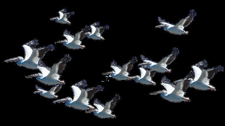 pelican+water+softeners+lakeland
